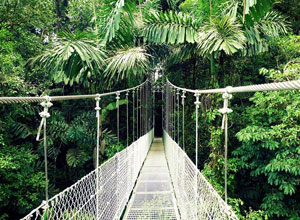 The Arenal hanging bridges