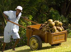 Coconut man, Kenya