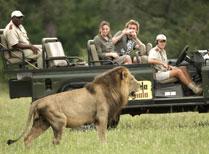 Mala Mala Game Reserve