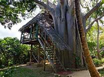 Chole Mjini