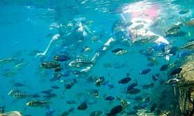 lake malawi snorkelling
