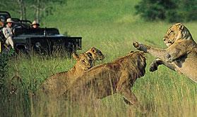 Rhino in Mala Mala