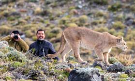 Puma Tracking in Patagonia