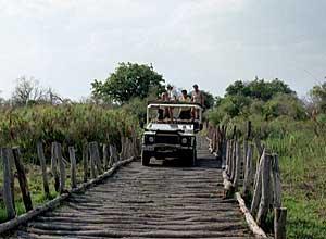 Bridge into Moremi Game Reserve