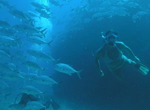 Enjoy some snorkelling near Canos Island