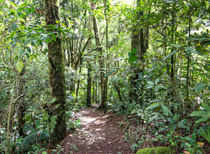 Follow a nature trail in Bajos del Toro