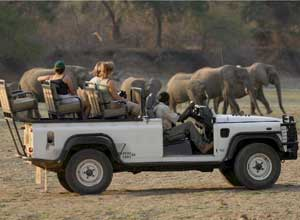 Game drive with the Bushcamp company