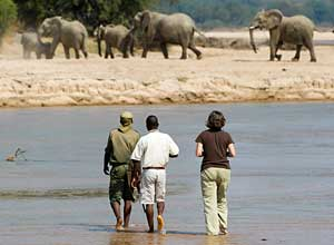 Walking safari based at Kapamba