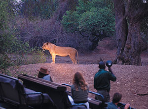Evening game drive on the River Journeys itinerary