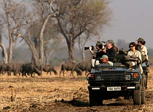 On a game drive with Shenton Safaris