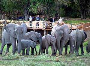 Elephants close to Kafunta River Lodge