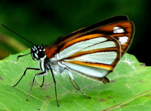 See butterflies in the cloudforest