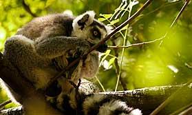 Essence of Madagascar