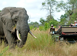 Game drive at Nottens Bush Camp