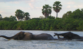 Selous Wilderness and Zanzibar