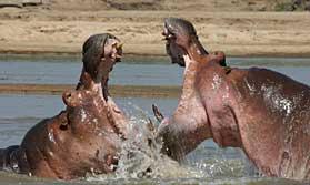 Wildlife watching on Robin Pope Safaris River Journeys