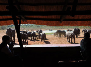 Watch elephants from the hide at Ivory Lodge