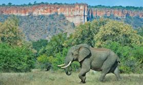 Elephant at Chilo Gorge