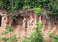 Manu Biosphere Reserve