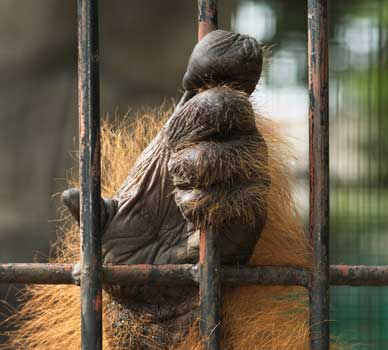 captive animal hand