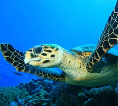 close up of turtle under water